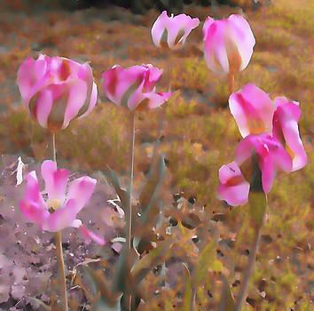 Kristie  Bonnewell - Tulips