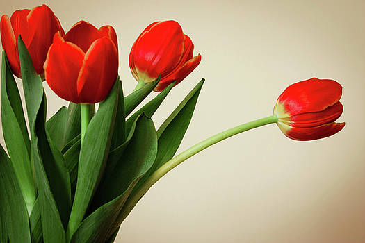 Tulips by Leah Dore