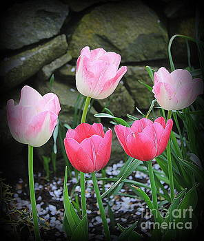 Tulips Lovely in Shades of Pink by Dora Sofia Caputo Photographic Art and Design