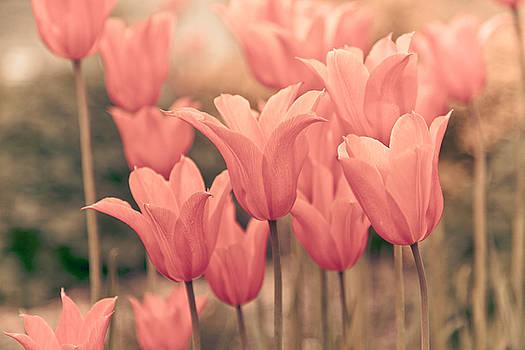 Tulips by Maria Heyens