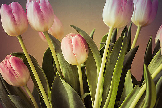 Tulips by Michele Wright