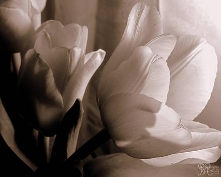 Karen Musick - Tulips of Love Too