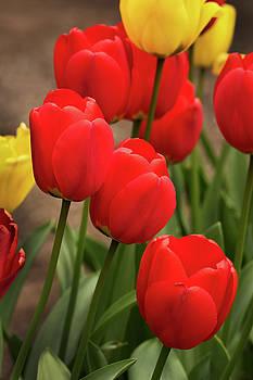 Tulips of Western Washington by David Lunde