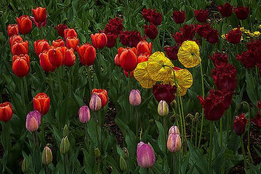 Rick Strobaugh - Tulips on Display