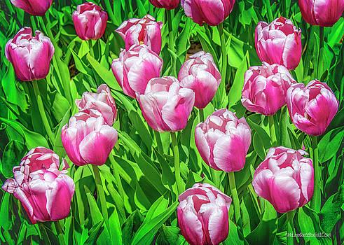 Tulips on Green by LeeAnn McLaneGoetz McLaneGoetzStudioLLCcom