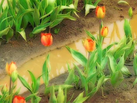 Bonnie Bruno - Tulips Reflected
