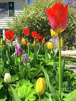 Tulips  by Wonju Hulse
