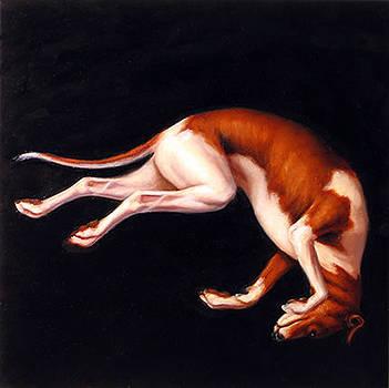 Tumbling Dog by Scott Goodwilllie
