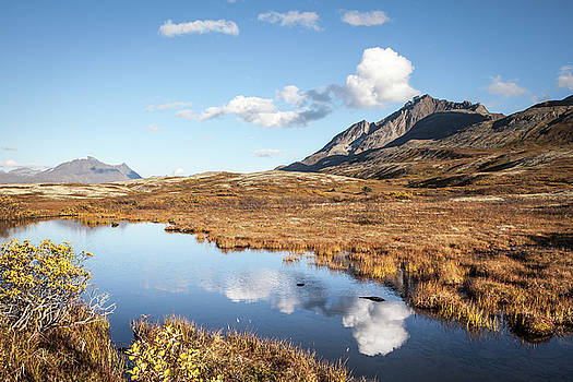 Tundra pond reflections in fall by Michele Cornelius