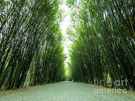 Tunnel bamboo trees and walkway. by Tosporn Preede