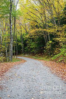 Tunnel Brook Road - Benton New Hampshire by Erin Paul Donovan