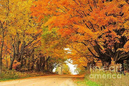 Terri Gostola - Tunnel of Orange Maples