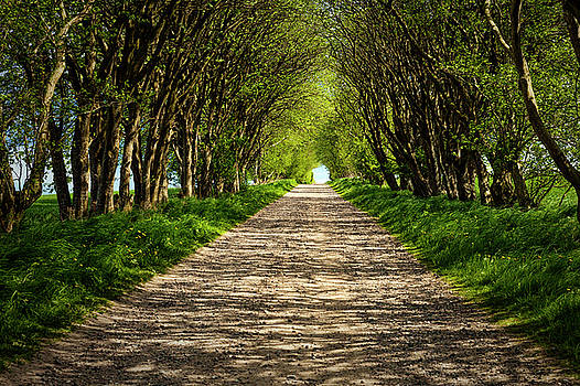 Tunnel of trees by Mike Santis