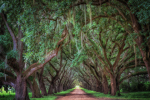 Tunnel of Trees by Susan Rissi Tregoning