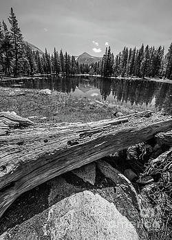 Michael Tidwell - Tuolumne Meadows in Monochrome