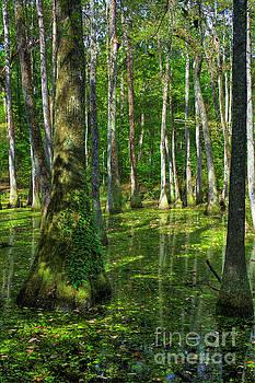 Larry Braun - Tupelo Trees in Mississippi