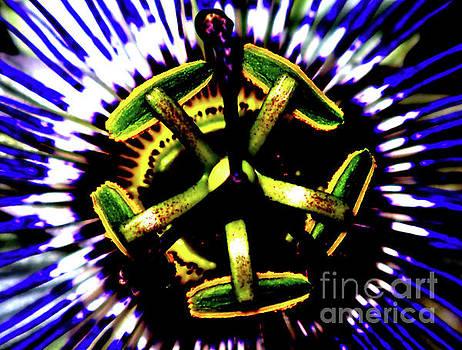 JORG BECKER - Turbine des fleurs