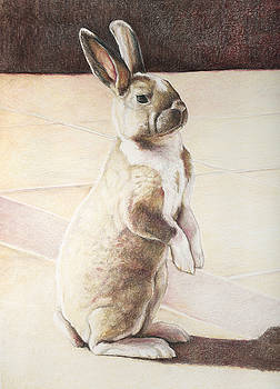 Turbo Bunny by Charlotte Yealey