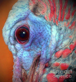 Turkey Head shot by Kim Pate