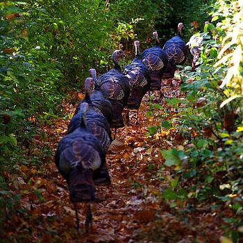 Turkey Parade by Valerie Hesslink
