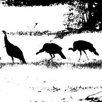 Turkey Silhouette  by Kim Pate
