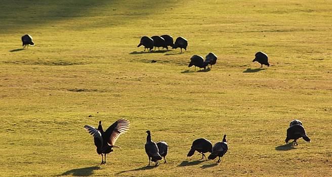 Turkey Stretch by Linda Meyer