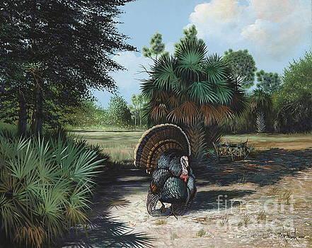 Turkey Strut by Michael Nowak
