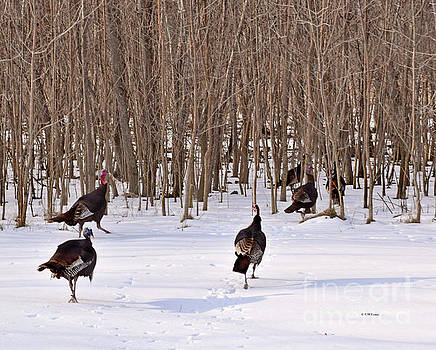 Turkey Trot by Kathy M Krause