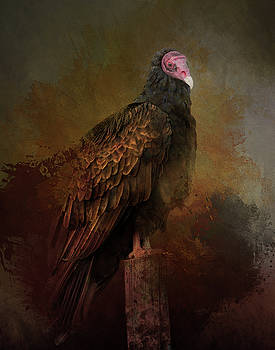 Turkey Vulture by Gloria Anderson