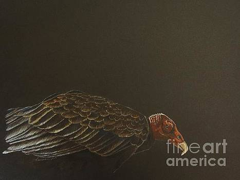 Turkey Vulture by Laurianna Taylor