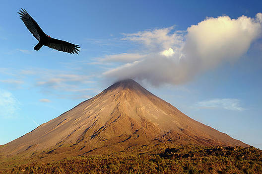 Reimar Gaertner - Turkey vulture soaring at active Arenal Volcano Costa Rica at su