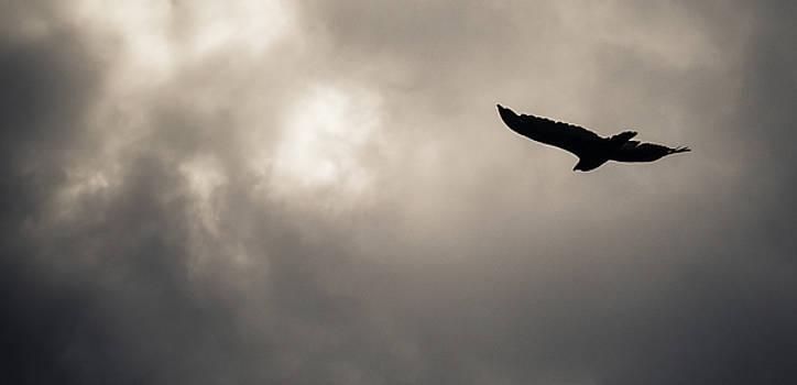 Turkey Vulture by Trance Blackman