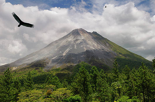 Reimar Gaertner - Turkey vultures flying aroung active Arenal Volcano Costa Rica