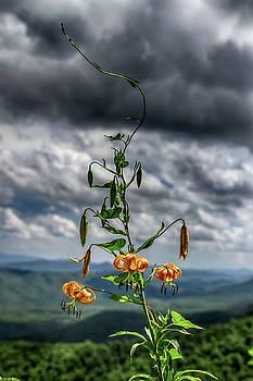 Turks Cap Lily in the Blue Ridge Mountains by John Haldane