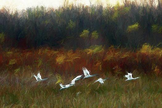 Turner Swans by John Freidenberg