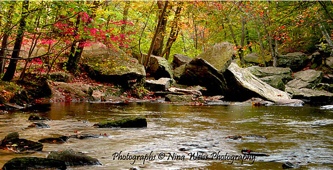 Turning Leaves on Peaceful River by Nina Weiss