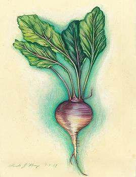 Turnip by Linda Nielsen
