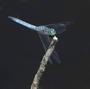 Dee Carpenter - Turquoise Dragonfly