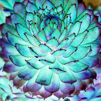 Turquoise Succulent 1 by Marianne Dow