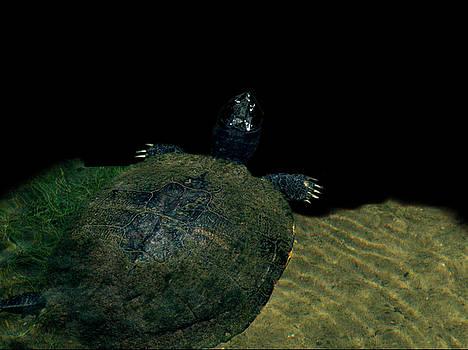 Turtle 2 by David Weeks