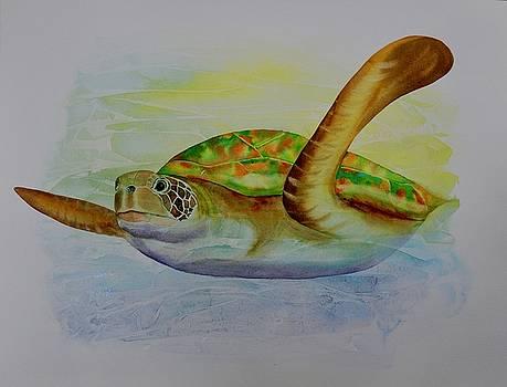 Turtle by Carolyn Judge