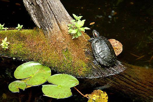 Robert Anschutz - Turtle in Pond