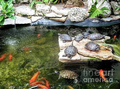 John Rizzuto - Turtle Life in Key West