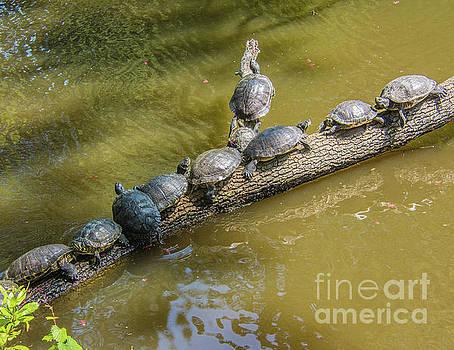 Turtle Log Jam by John Greco