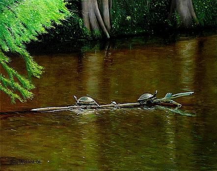 Turtle Log Spa by Doug Strickland