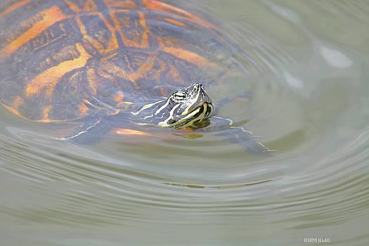 Deborah Benoit - Turtle Medicine