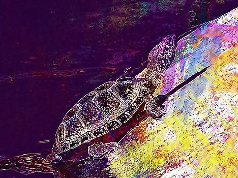 Turtle Nature Reptile Animal  by PixBreak Art