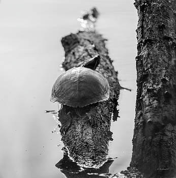 Turtle On A Log - BW by Brian Wallace
