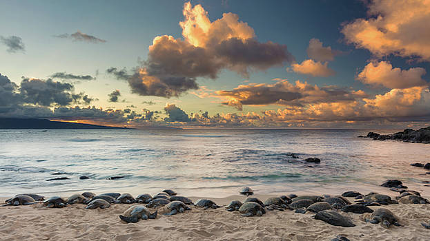 Turtle Party at Hookipa by Pierre Leclerc Photography