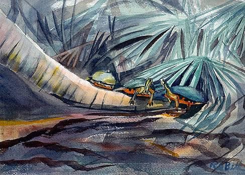 Turtle Talk by Randy Bell